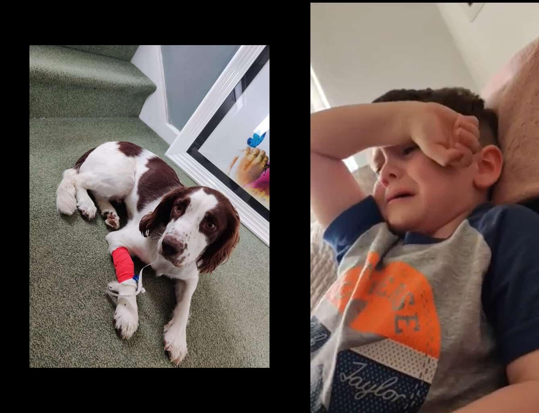 Local little boy left heartbroken after his dog dies from eating litter